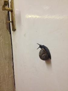 A Snail...